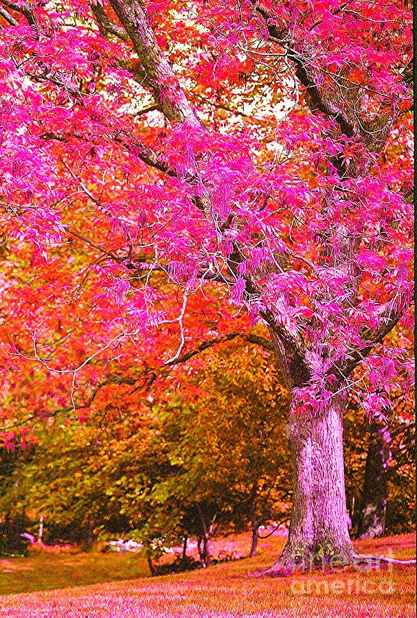 Fuschia Photograph - Fuschia Tree by Nadine Rippelmeyer