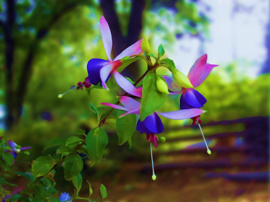 Flowers Photograph - Fushias 08 by Artzmakerz