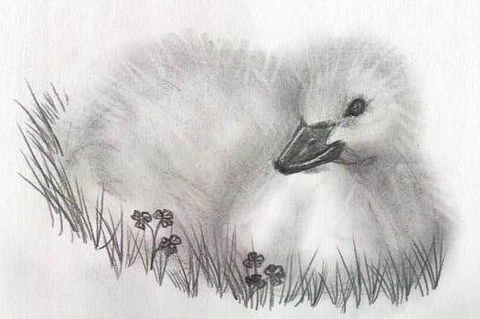 Duck Drawing - Fuzzy by Patricia Merewether