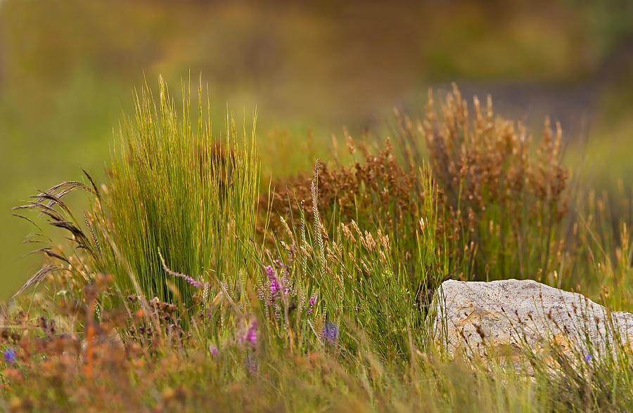 Reeds Photograph - Fynbos Reeds by Basie Van Zyl