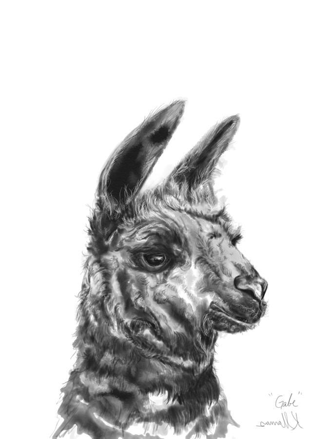 Llamas Drawing - Gabe by K Llamas