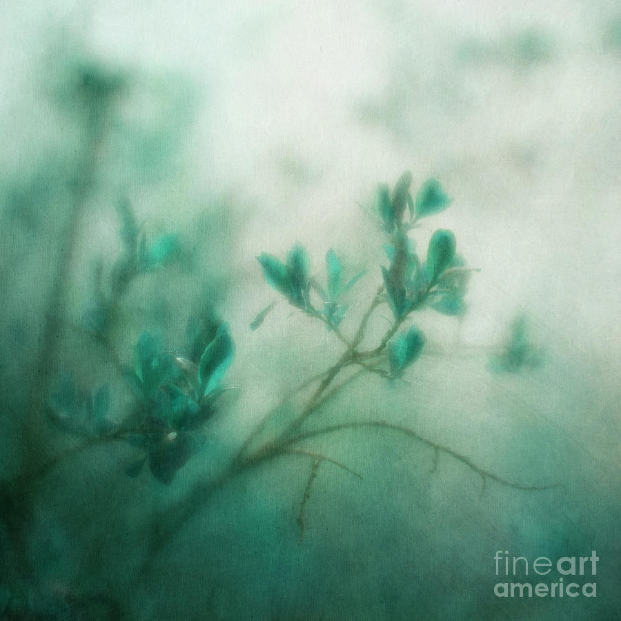Blue Photograph - In The Deep Forest 3 by Priska Wettstein
