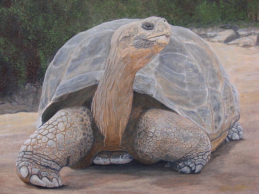 Galapagos Tortoise Painting - Galapagos Tortoise by Jeffrey Oldham