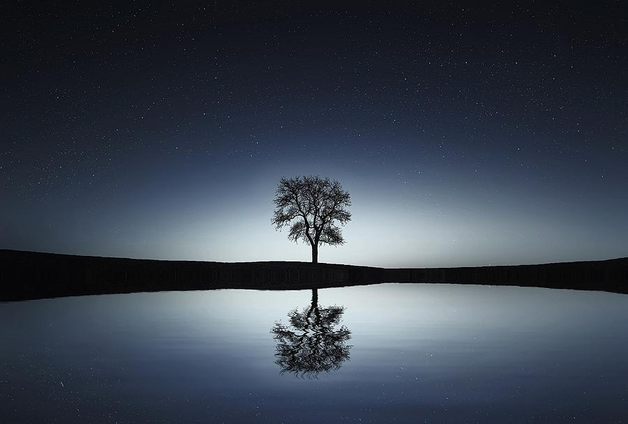 Tree Photograph - Solitude by Gallery Of Modern Art