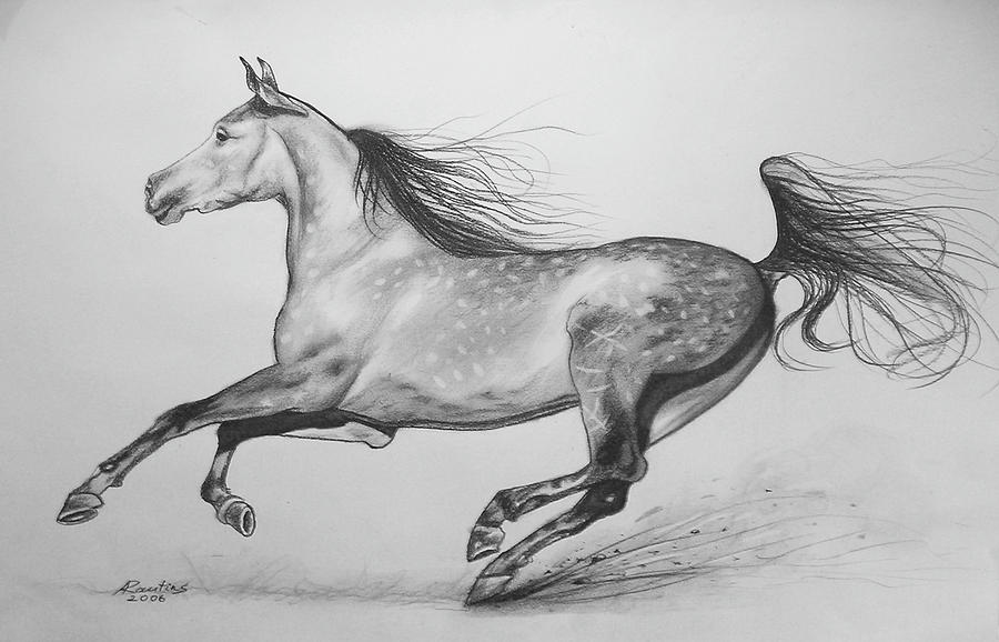 Horse Drawing - Galloping Horse by Agris Rautins