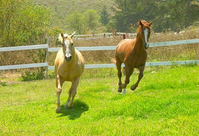 Horses Photograph - Gallup by Sindi June Short