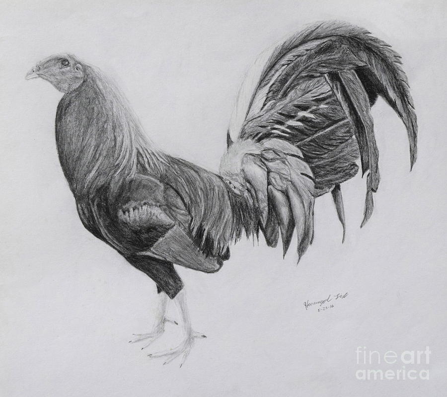 Gamecock Drawing by Hanunyah Fish