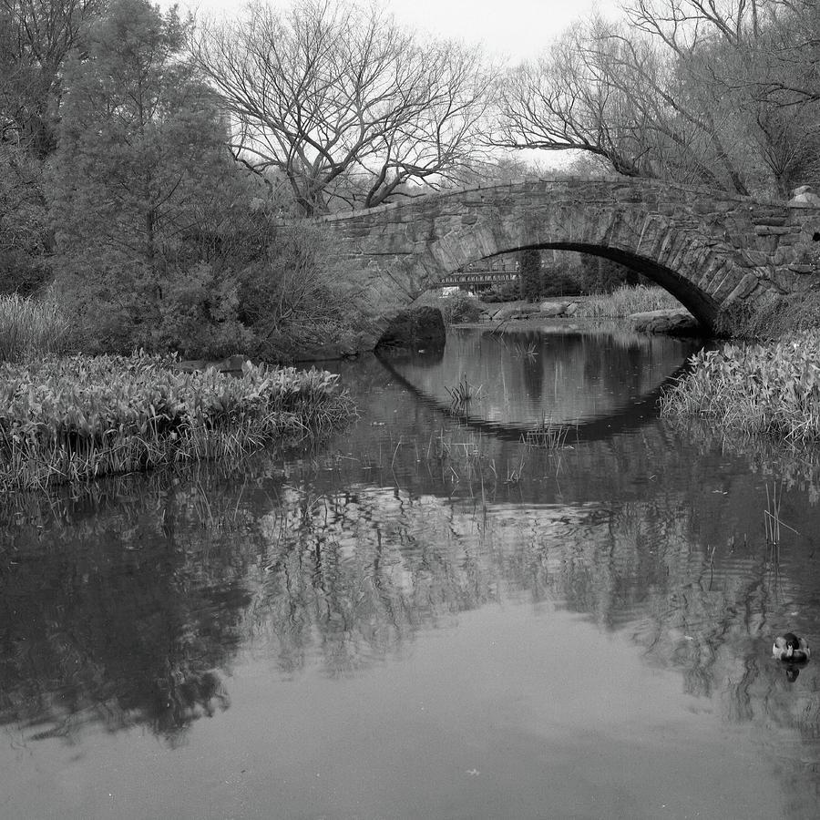 Square Photograph - Gapstow Bridge - Central Park - New York City by Holden Richards