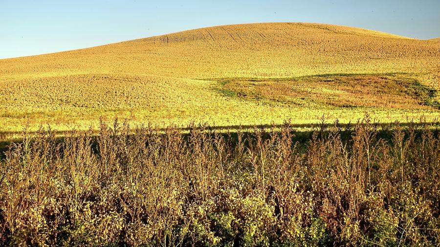 Garbanzo Hillside Photograph