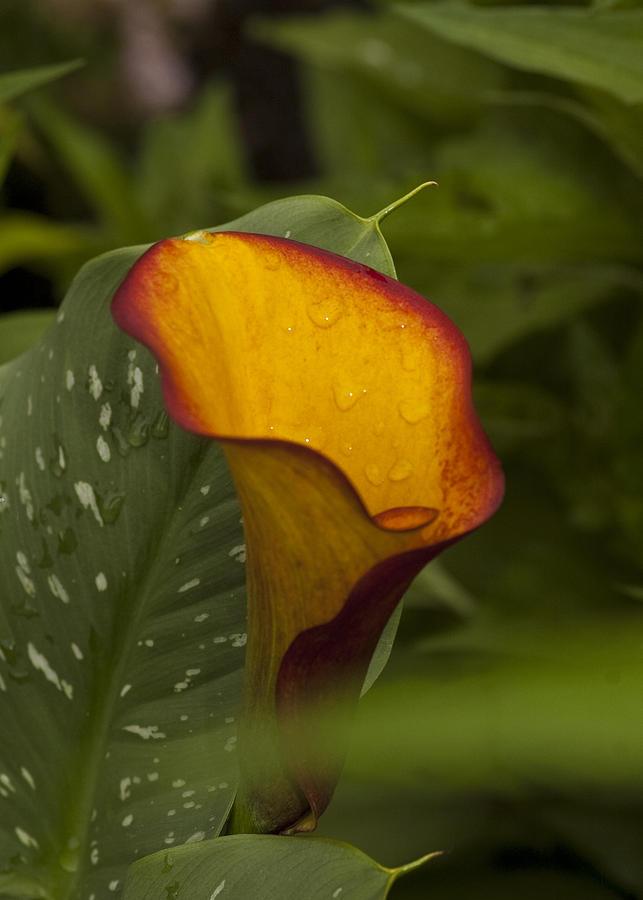 Master Gardeners Association Photograph - Garden Beauty  by Paul Cannon