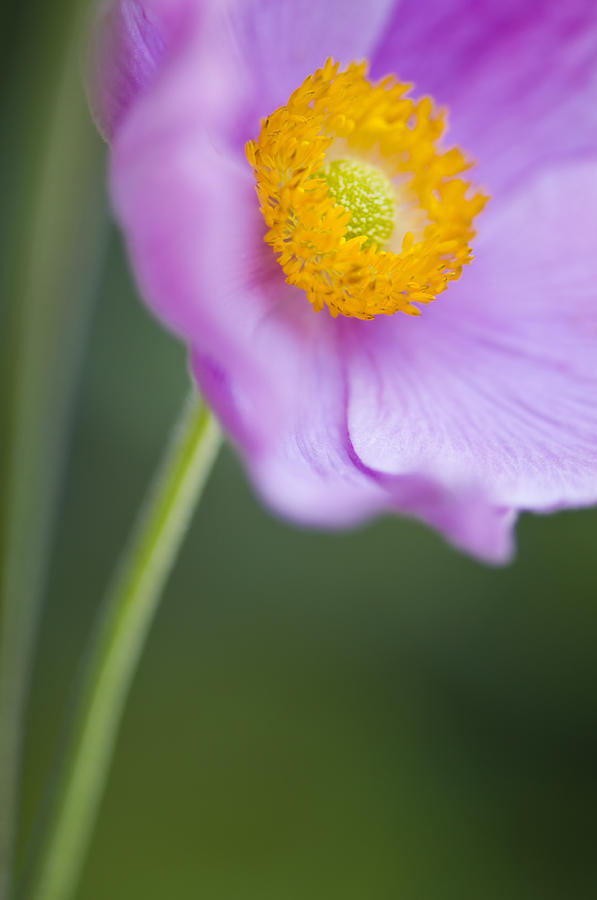 Flower Photograph - Garden Beauty by Silke Magino