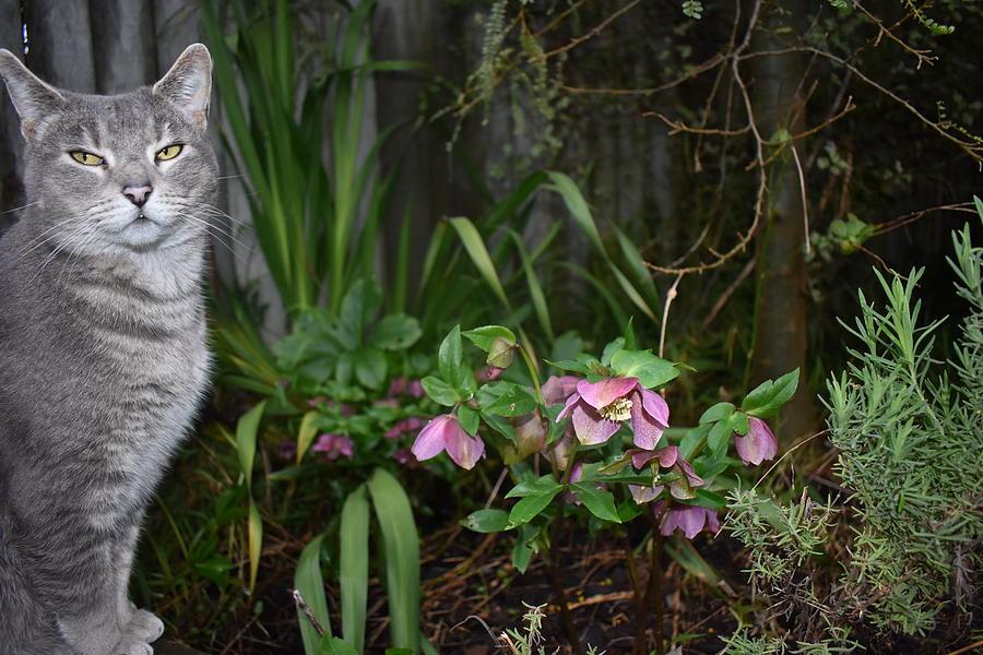 Garden Photograph - Garden Cat by Abby Wendy