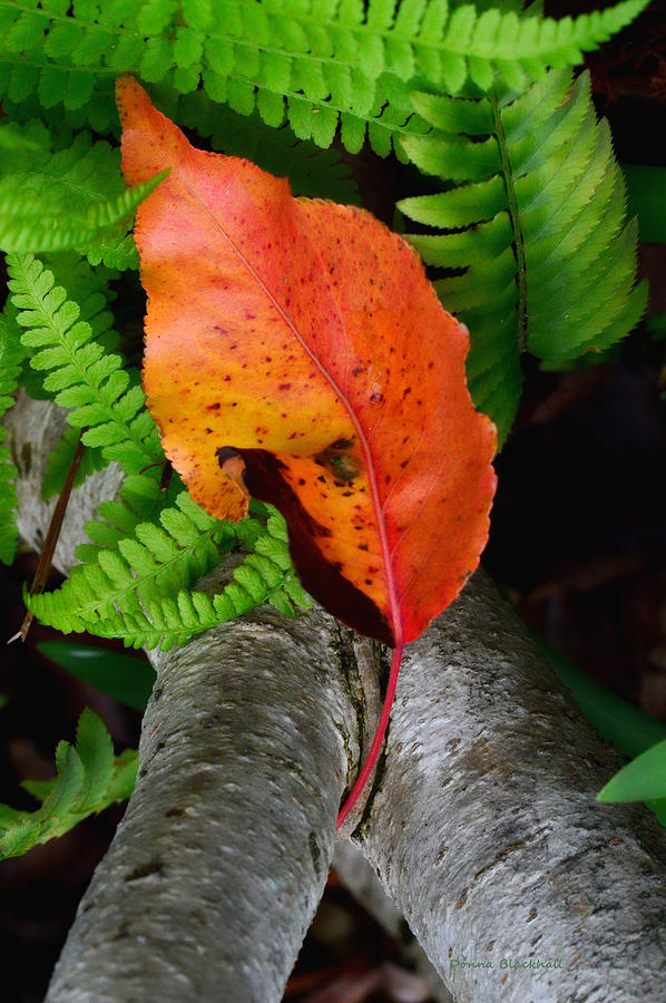 Red Leaf Photograph - Garden Charmer by Donna Blackhall