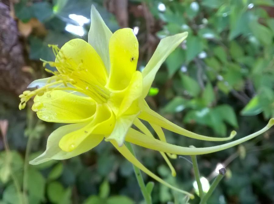 Garden Flower Photograph