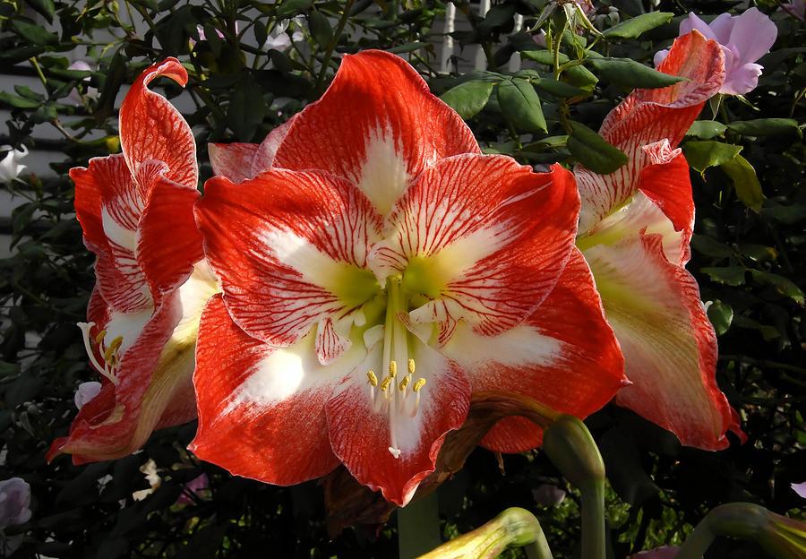 Garden Photograph - Garden Flowers by David Lee Thompson