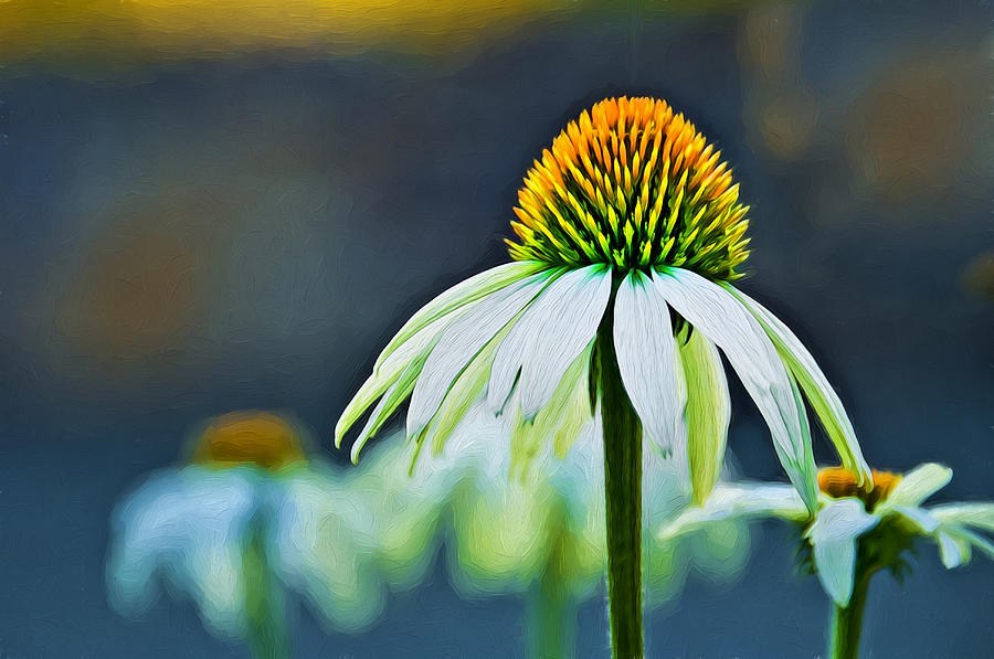 Gerbera Photograph - Bristle Flower by Maria Coulson