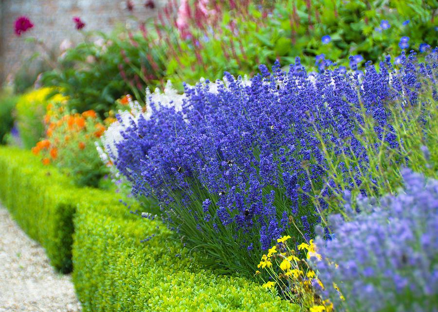 Blue Photograph - Garden Flowers by Svetlana Sewell