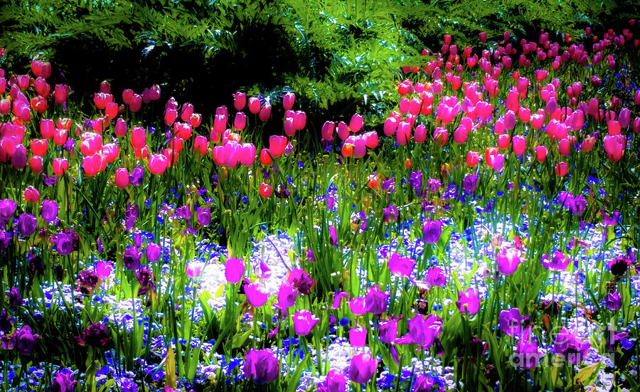 Tulips Photograph - Garden Flowers With Tulips by D Davila