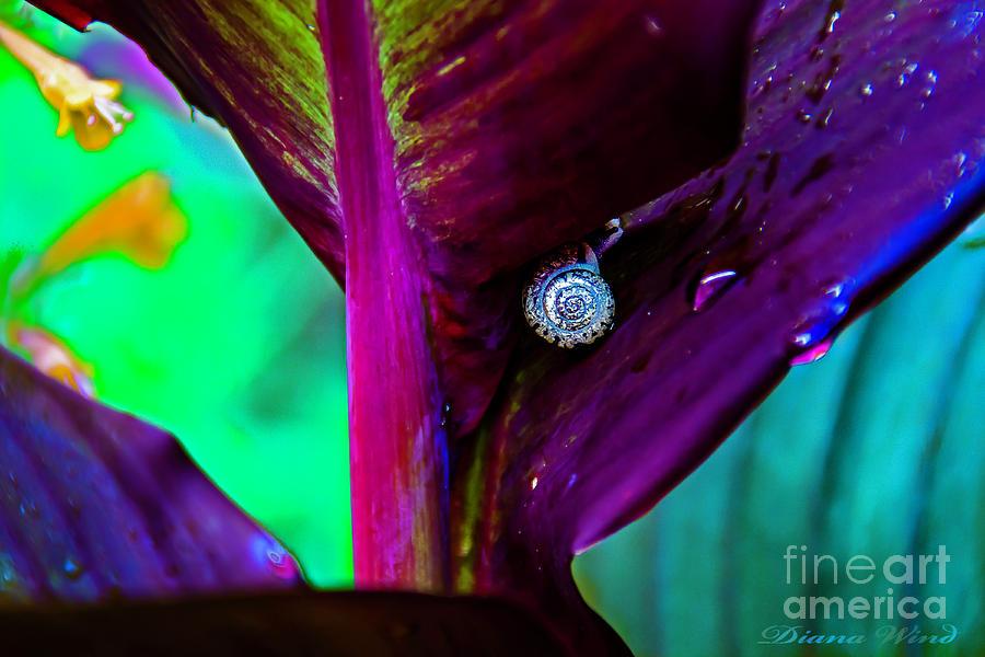 Canna Photograph - Garden Gem by Diana Wind