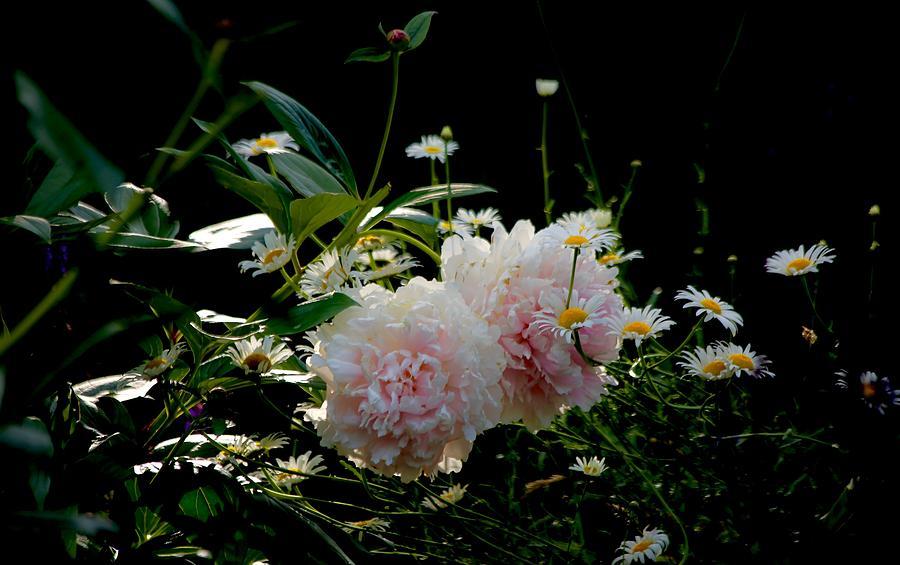 Peony Photograph - Garden by Gillis Cone