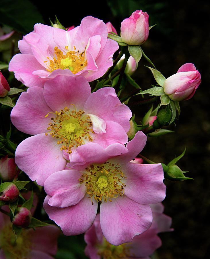 Garden Glory by Michael Friedman