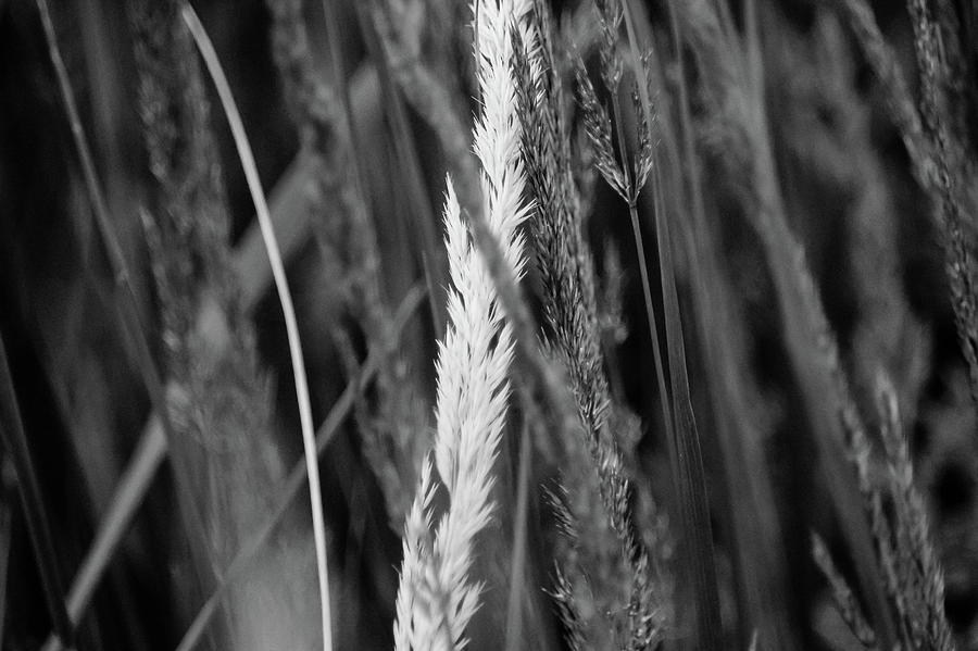 Garden Grass In Black And White Photograph