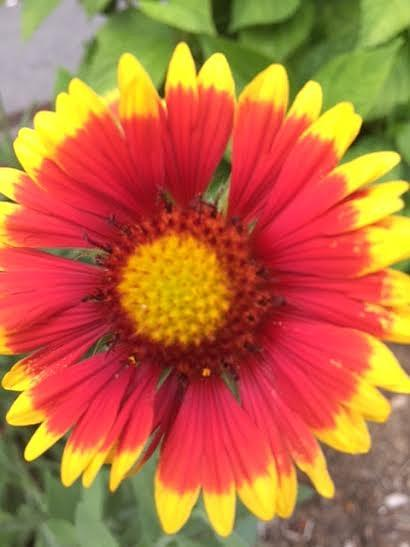 Garden Jewel Photograph by Heather Riley
