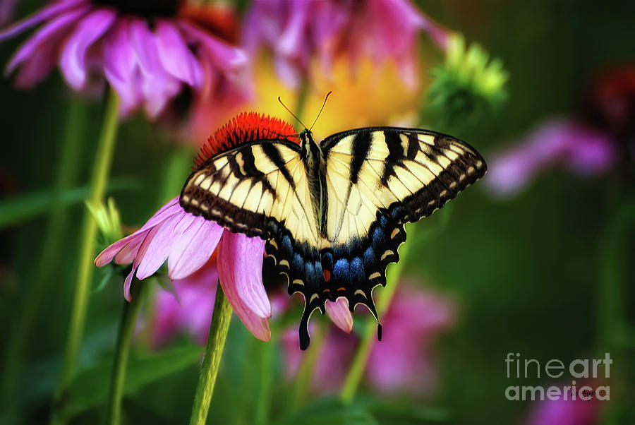 Butterfly Photograph - Garden Jewelry by Lois Bryan