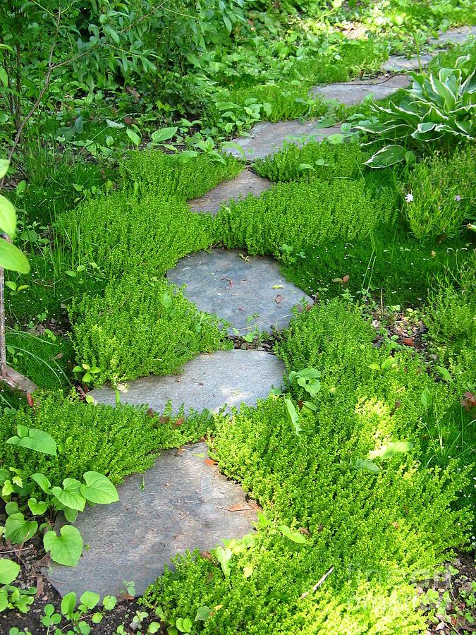 Path Photograph - Garden Path by Idaho Scenic Images Linda Lantzy