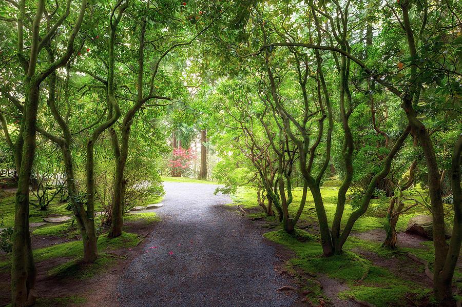 Garden Photograph - Garden Path In Spring by David Gn