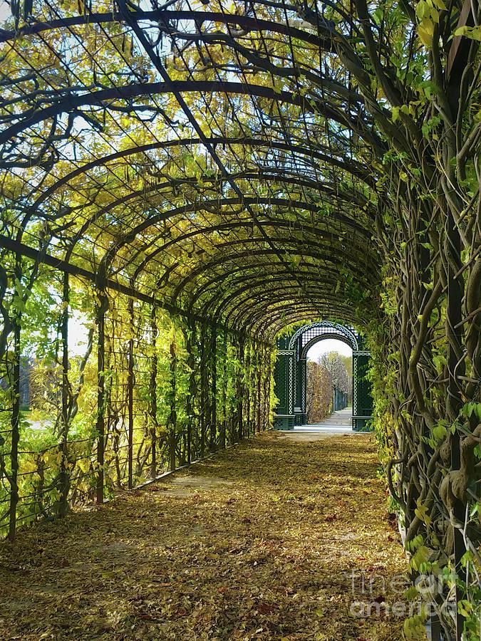 Garden Path by Marguerita Tan