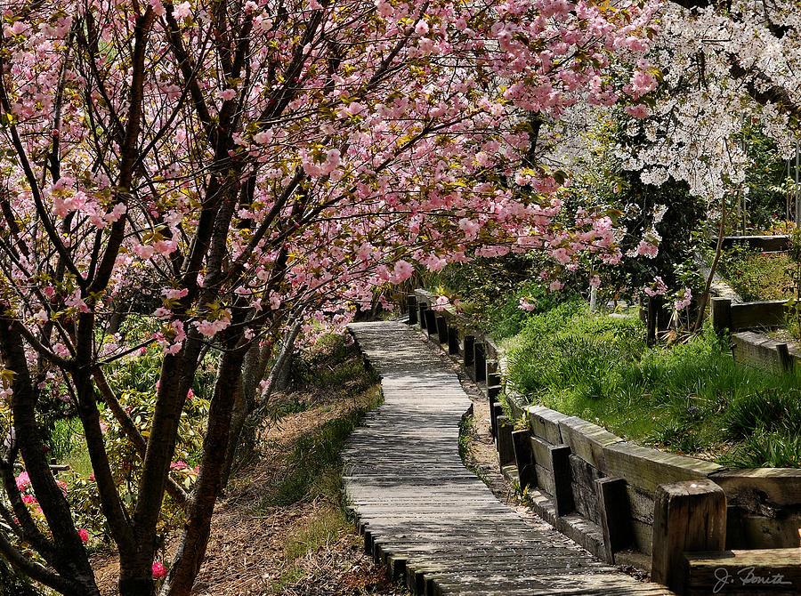 Japan Photograph - Garden Path No. 2 by Joe Bonita
