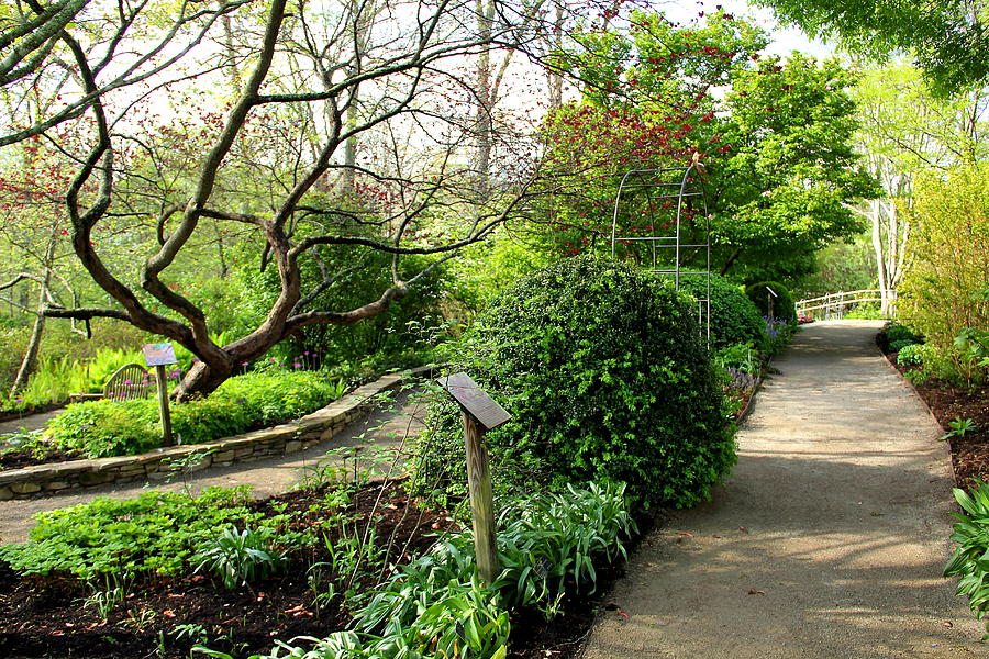 Garden Photograph - Garden Paths by Allen Nice-Webb