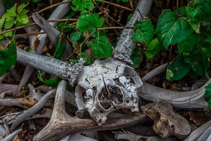 Garden Skull II Photograph