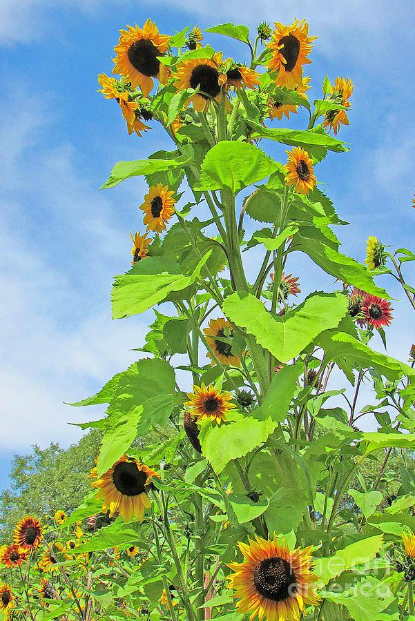 Garden Splendor by Joyce Creswell