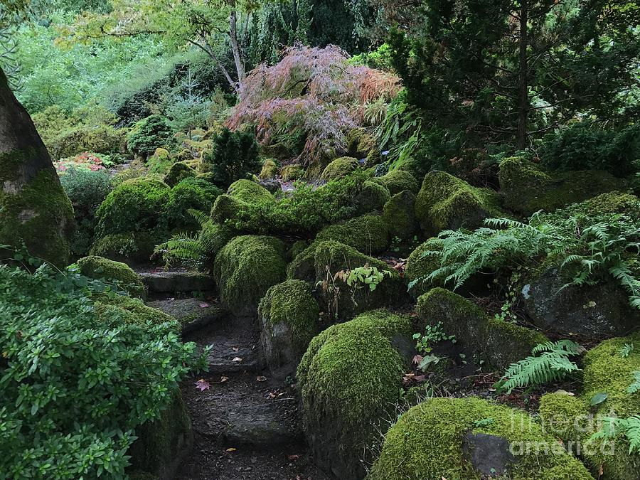Garden Steps by Charlene Mitchell