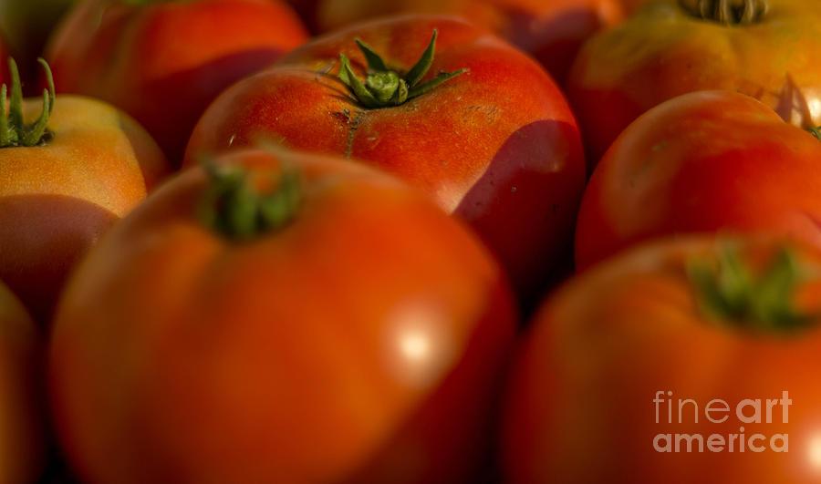 Garden Tomatoes Photograph