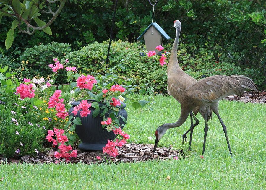 Garden Photograph - Garden Visitors by Carol Groenen