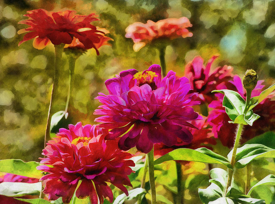 Garden Zinnias by JGracey Stinson
