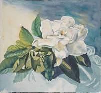 Watercolor Painting - Gardenia by Diane Ziemski