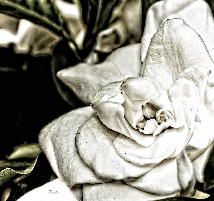 Flowers Photograph - Gardenia Sketch by Angel H Juarbe