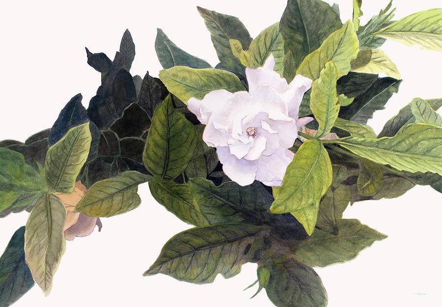 Gardenias by Christopher Reid