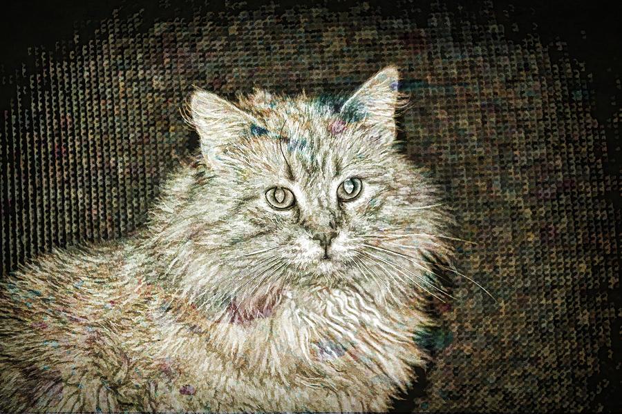 Cat Photograph - Garfield by David Yocum