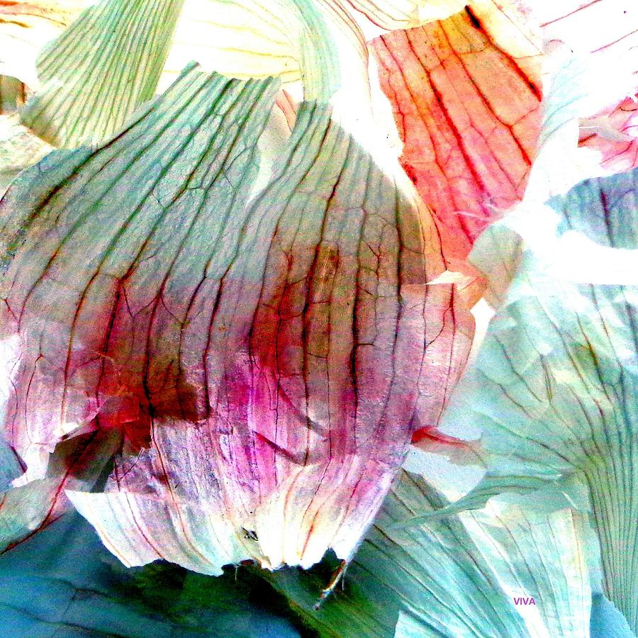 Garlic  Abstract   Series by VIVA Anderson