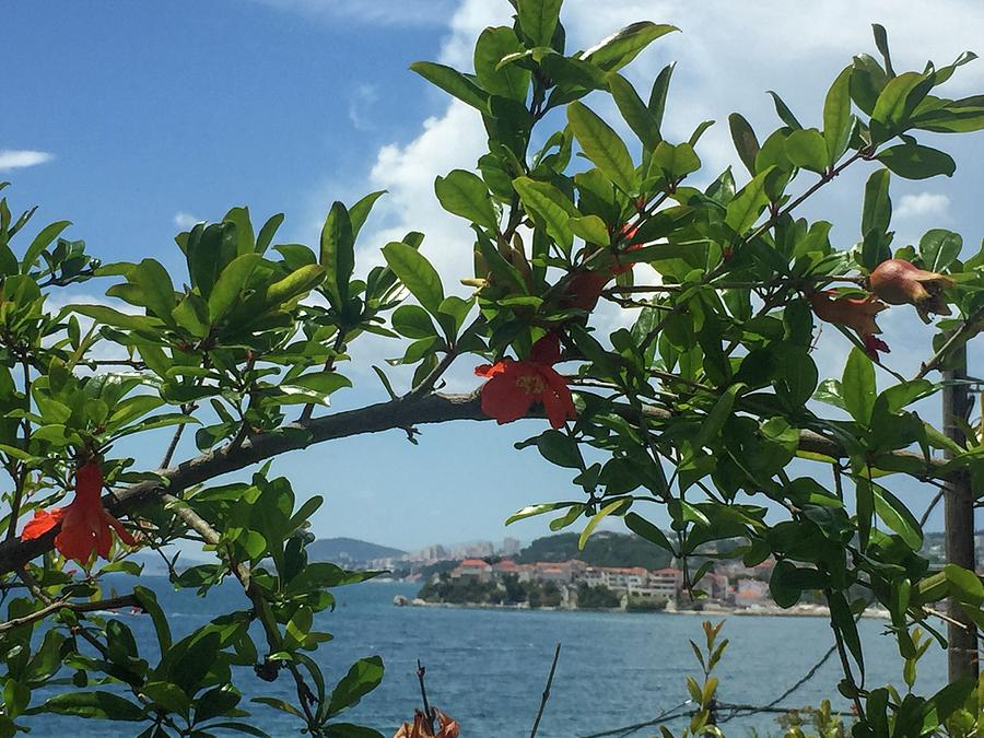 Garnet Photograph - Garnet Fruit Flowers by Olga Kurygina