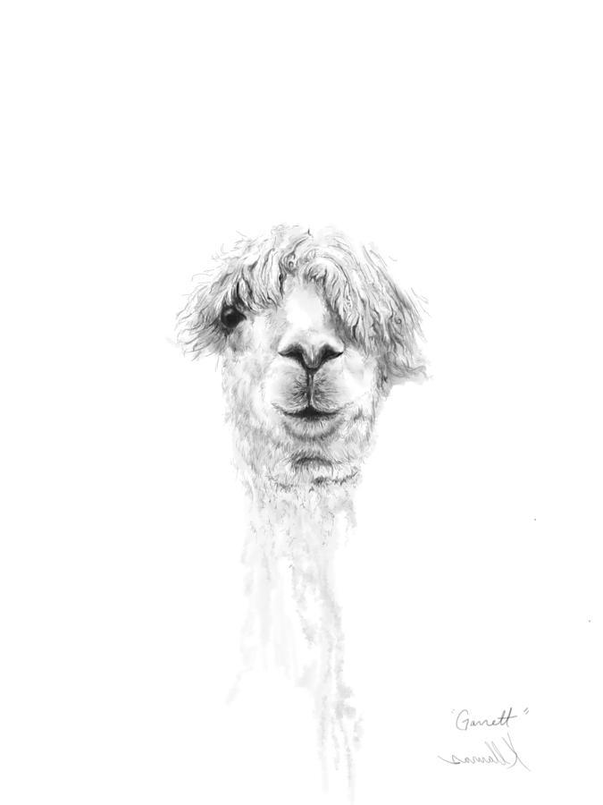 Llamas Drawing - Garrett by K Llamas
