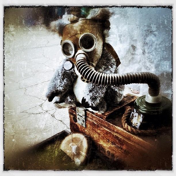 Gasmask Photograph - Gas Mask Koala by Natasha Marco