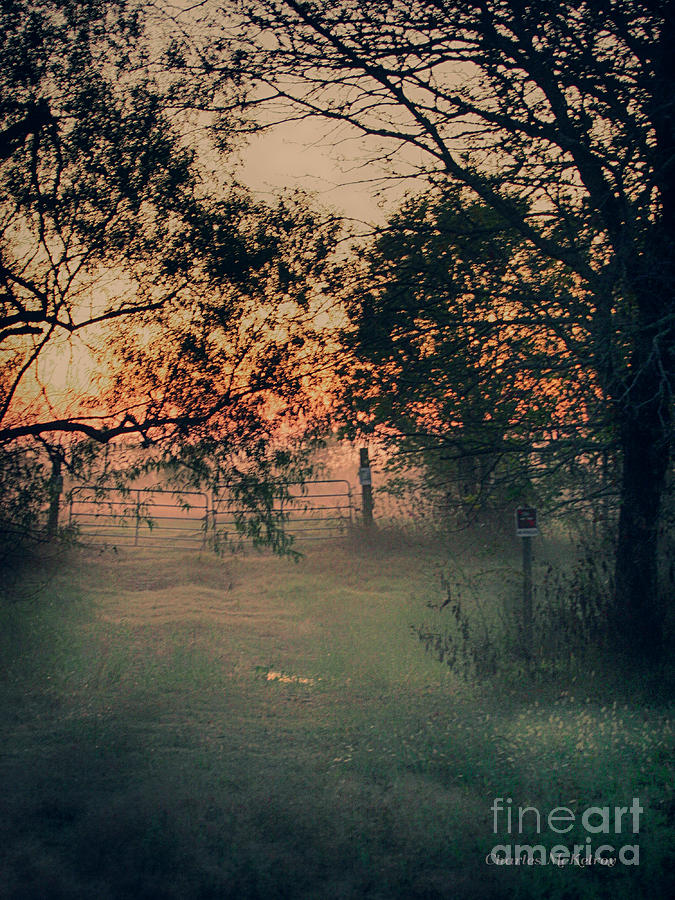 Gate Photograph - Gated Sunset by Charles McKelroy
