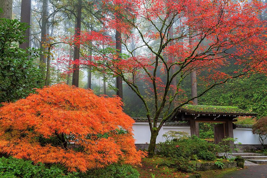 Japanese Garden Photograph - Gateway To Portland Japanese Garden by David Gn