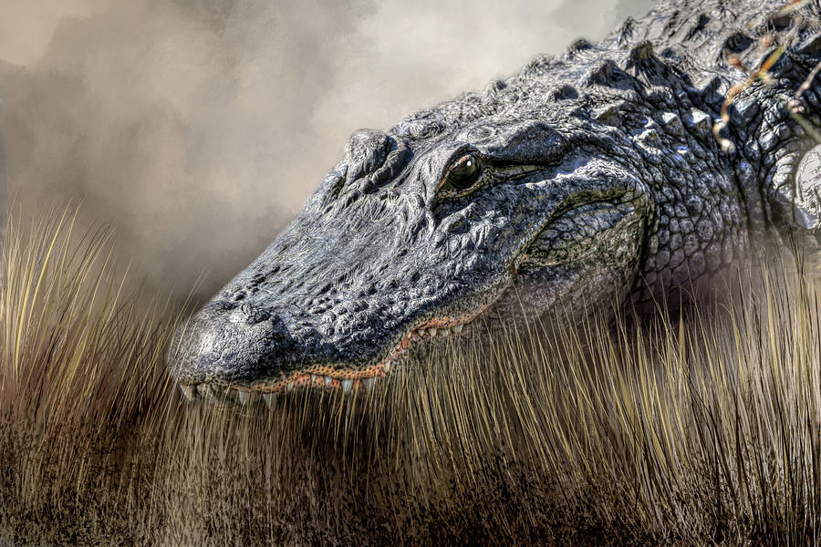 Florida Gator Photograph - Gator In The Grass by Donna Kennedy
